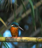 Environmental-park-vilamoura-orange-bird