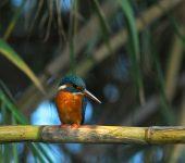 Environmental-park-vilamoura-orange-bird