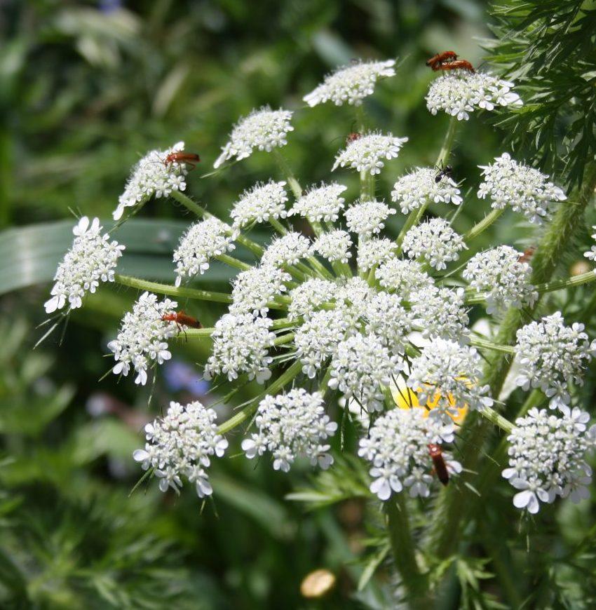 Enviromental-park-flower