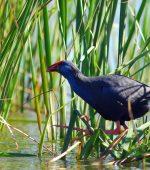 Black-bird-in-environmental-park-vilamoura